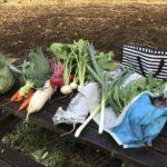 東京で手軽に収穫体験!会員制農場ポモナ(小金井)で食育レポート