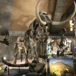 群馬県立自然史博物館をレビュー!ここでしか見ることができない恐竜?!